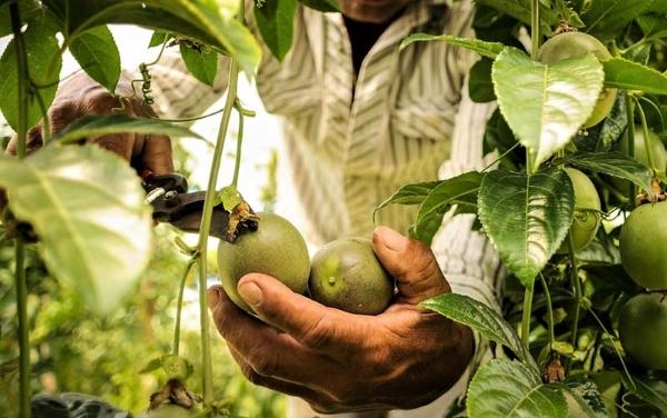 EXPORTACIONES DE INDUSTRIA AGROPECUARIA REGISTRAN MÁS DE 18 MDD EN 2020